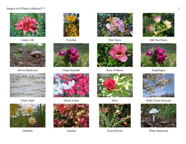 Sample-Plants600